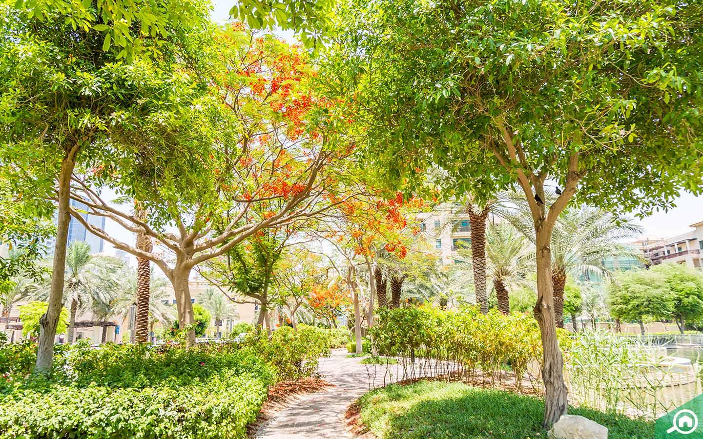حديقة في ذا فيوز