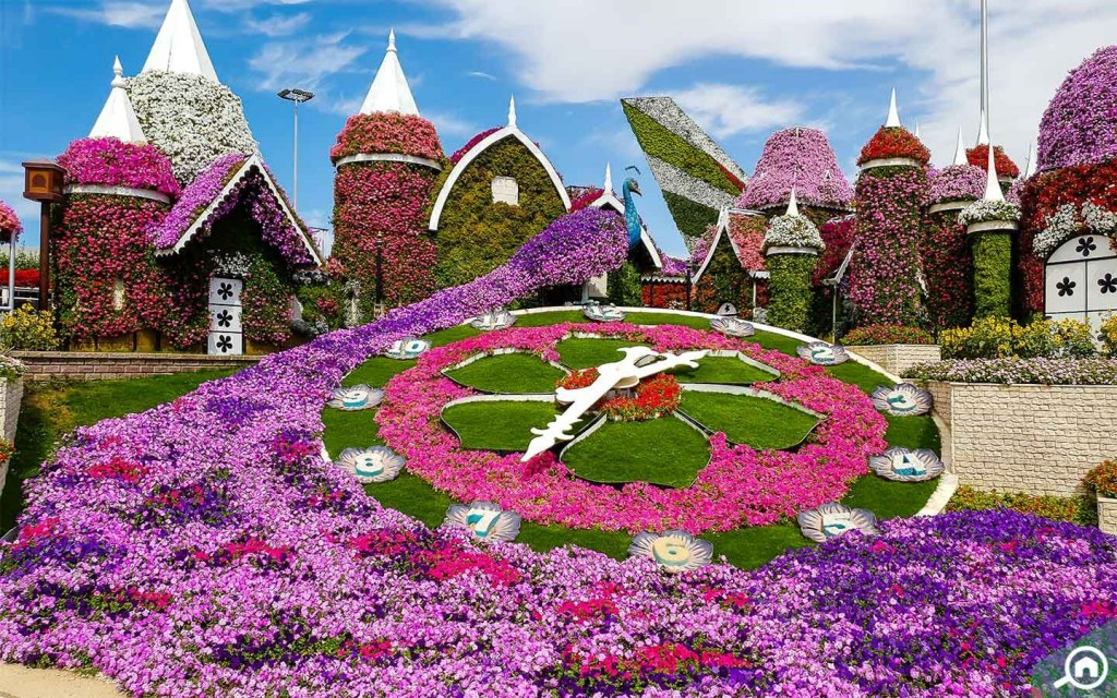 Dubai Miracle Garden located nearby