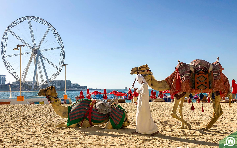 Dubai Industrial Park lifestyle