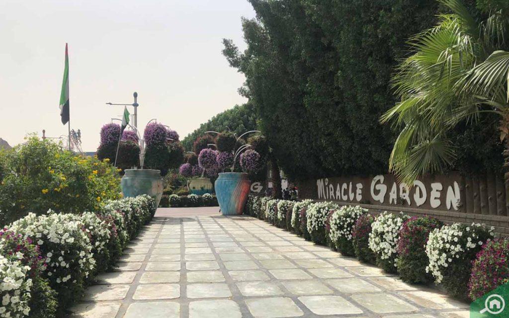dubai miracle garden in al barsha south