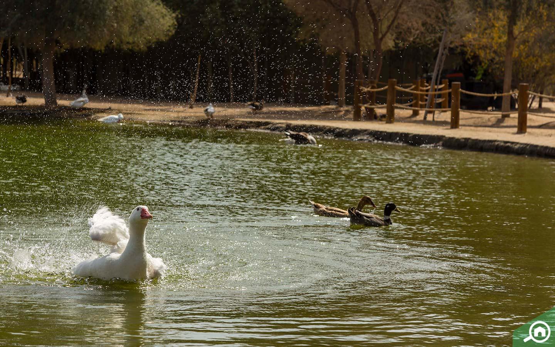 بحيرة القدرة في دبي