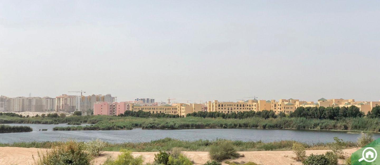 living in al warsan 1