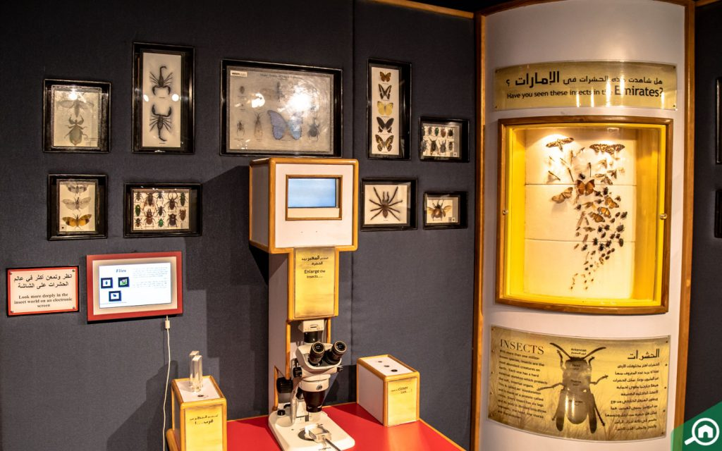 An inside view of Sharjah Science Museum
