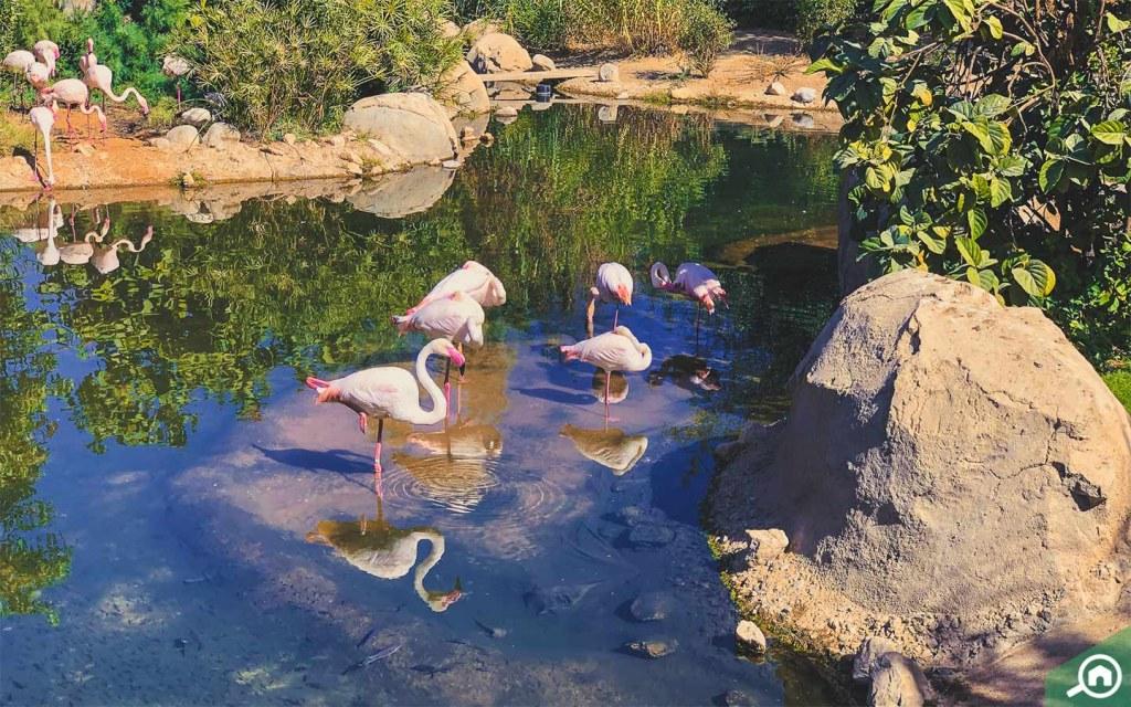birds in al ain zoo