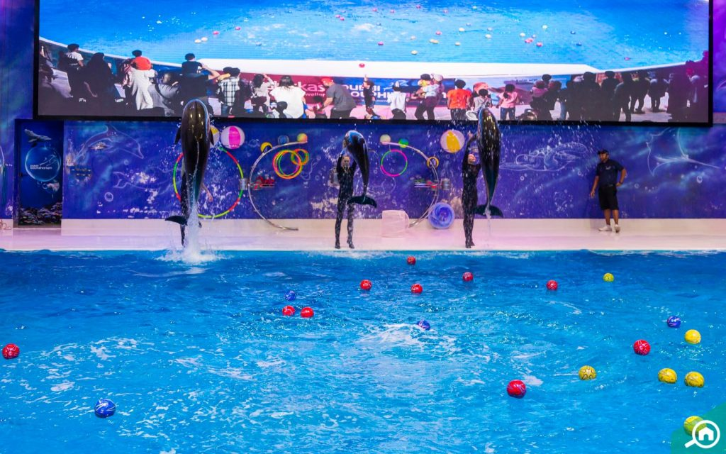 A view of a Dolphin show