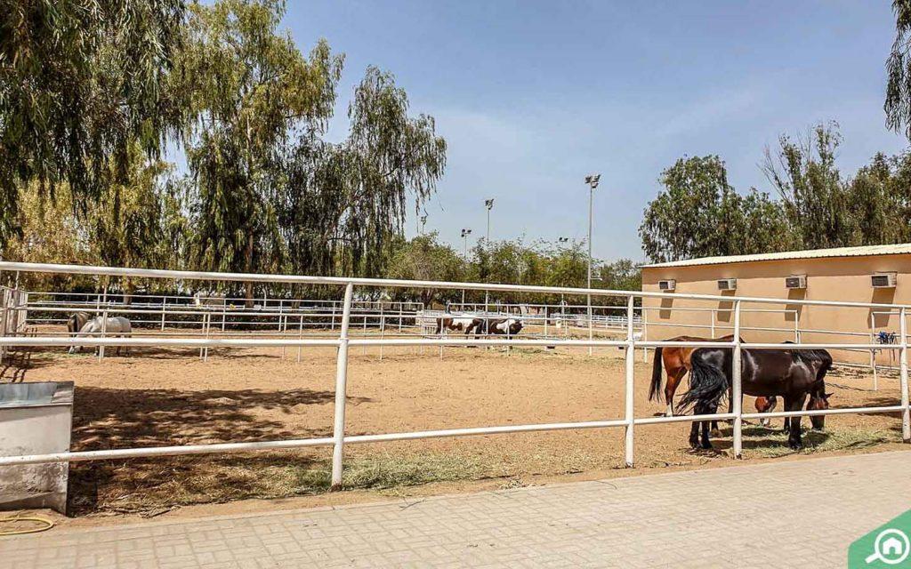 Sharjah Equestrian & Racing Club