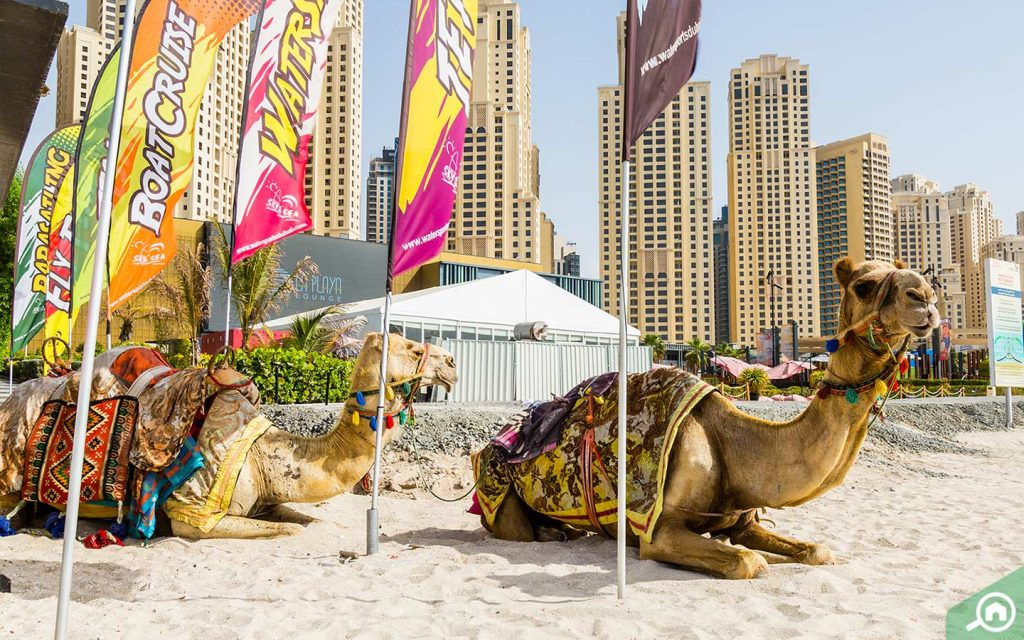 شاطئ جي بي ار في دبي