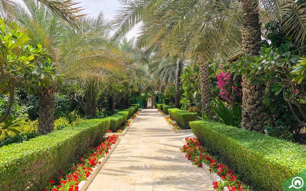 desert palm polo club in international city