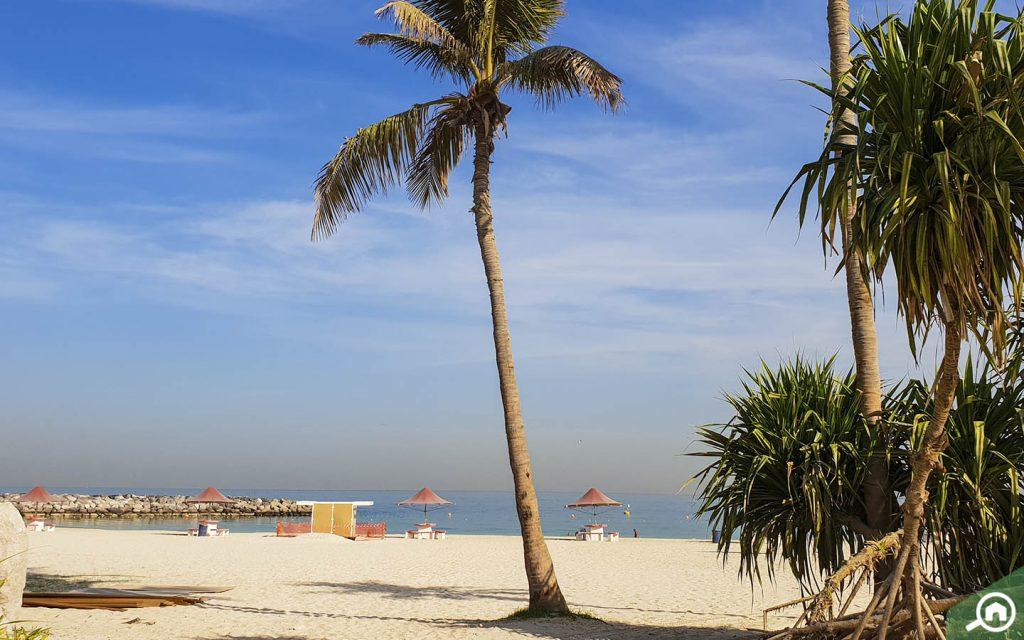 شاطئ مع نخلة