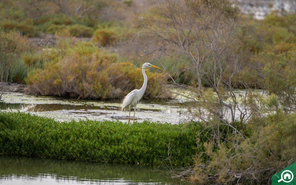 ras al khor wildlife sanctuary near al warqaa
