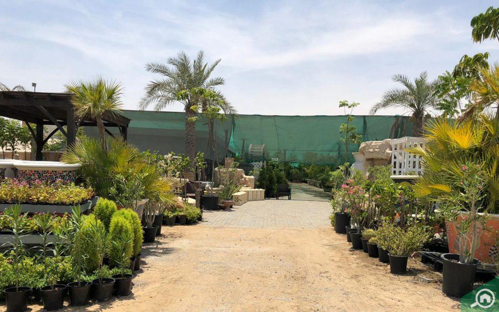 سوق النباتات