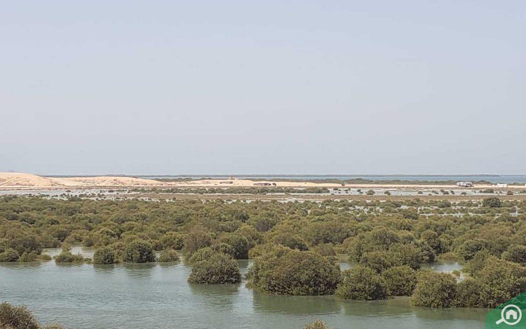 الأراضي الرطبة في خور البيضاء